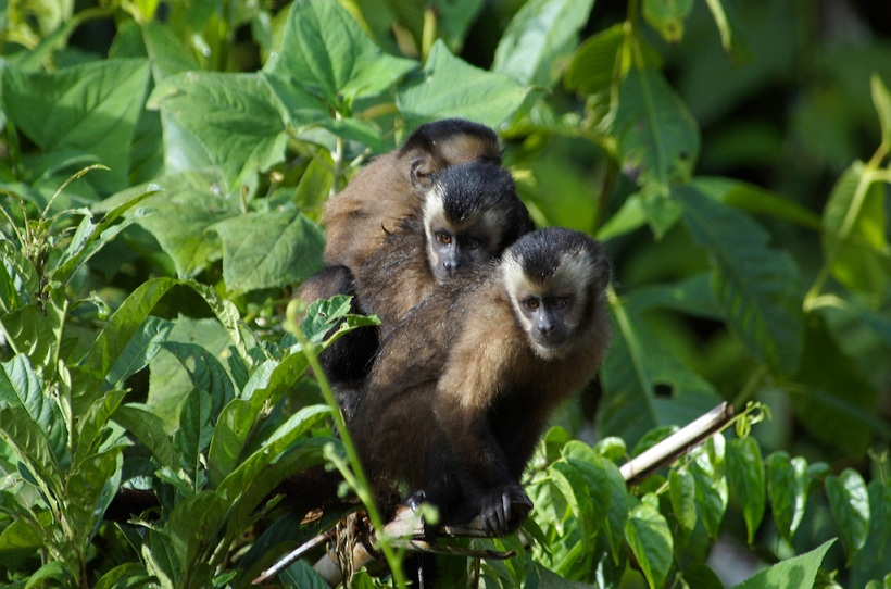 The Jungle Ultra Wildlife